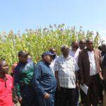 Le Deuxième Vice-Président de la République visite les champs des agriculteurs du sorgho blanc de Mishiha, encadrés par la BRARUDI