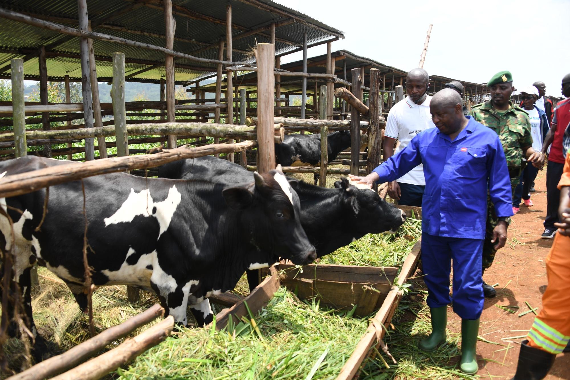 Karusi, troisième province visitée par le Chef de l'État, lors de ses descentes d'évaluation des projets agropastorales réalisés par la population avec l'appui de la Banque Mondiale